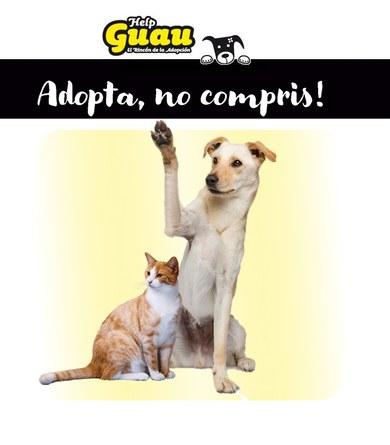Adopció responsable pel benestar animal