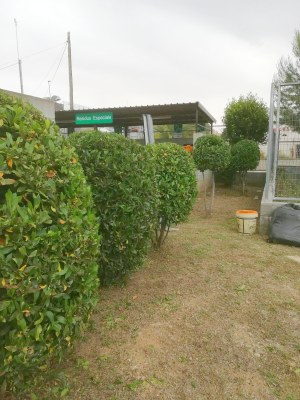 Deixalleria jardineria2.jpg