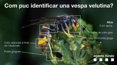 com-procedir-vespa-asiatica.jpeg